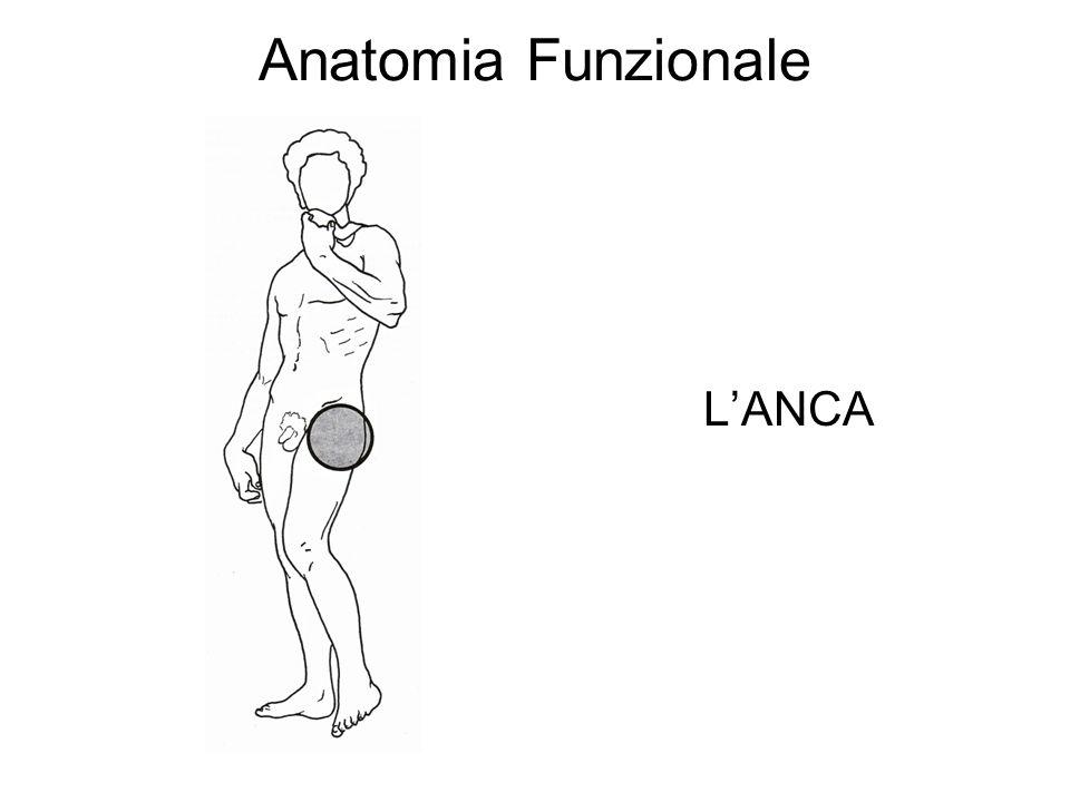 Anatomia Funzionale L'ANCA
