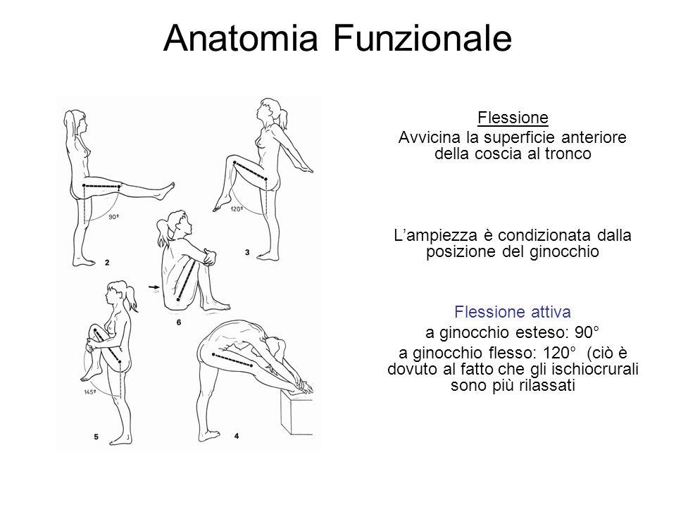 Anatomia Funzionale Flessione