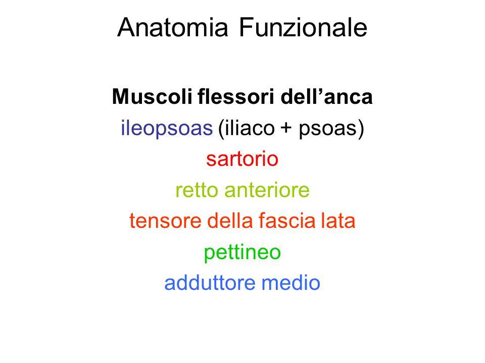 Anatomia Funzionale Muscoli flessori dell'anca