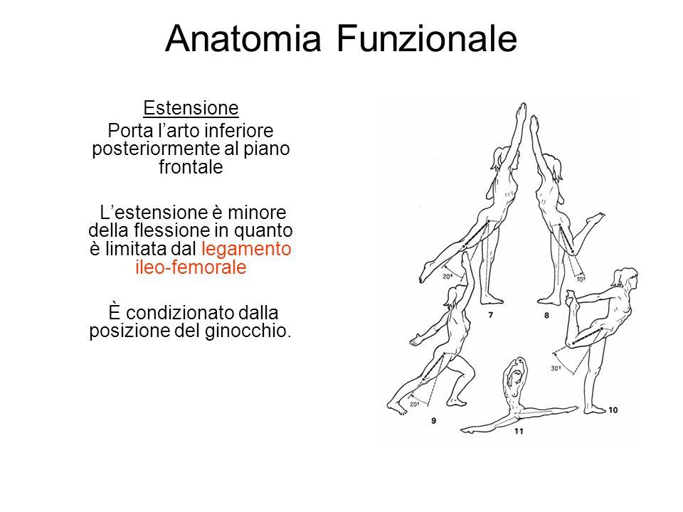 Anatomia Funzionale Estensione