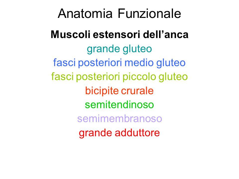 Anatomia Funzionale Muscoli estensori dell'anca grande gluteo