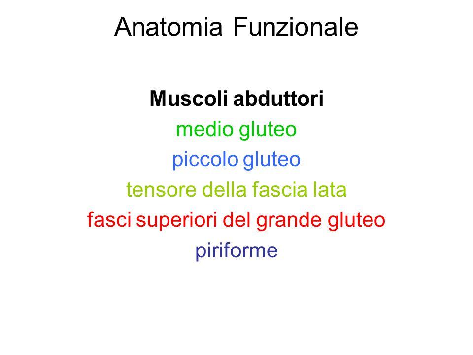 Anatomia Funzionale Muscoli abduttori medio gluteo piccolo gluteo