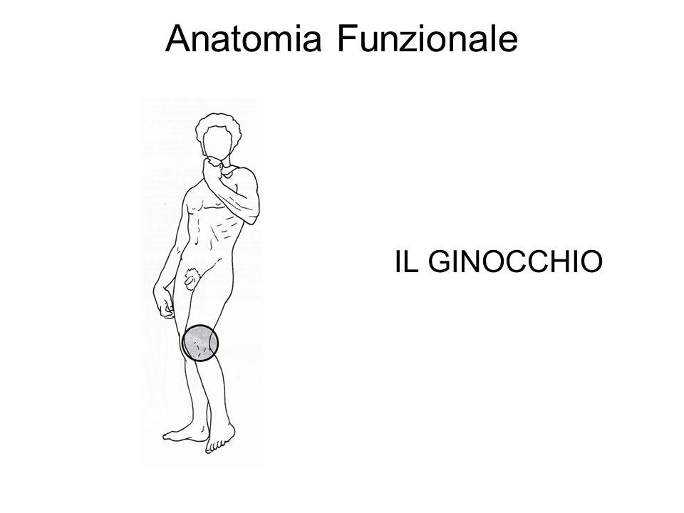Anatomia Funzionale IL GINOCCHIO