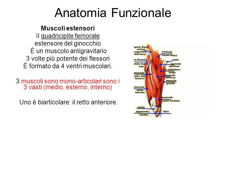 Anatomia Funzionale Muscoli estensori Il quadricipite femorale