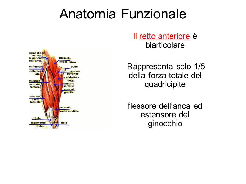Anatomia Funzionale Il retto anteriore è biarticolare