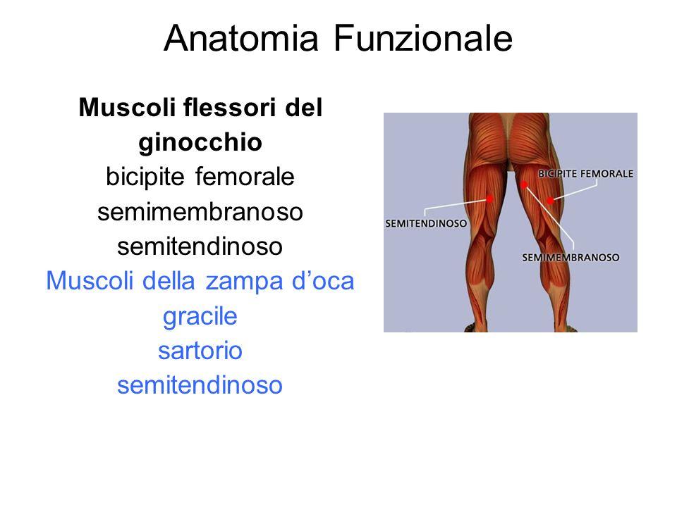 Muscoli della zampa d'oca