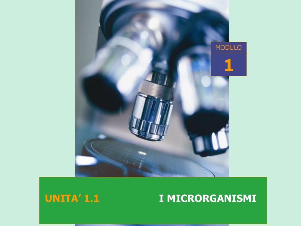 MODULO 1 UNITA' 1.1 I MICRORGANISMI