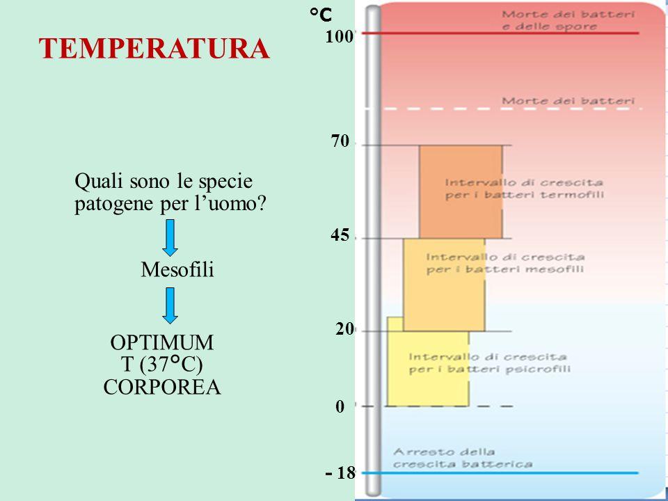 TEMPERATURA Quali sono le specie patogene per l'uomo Mesofili OPTIMUM