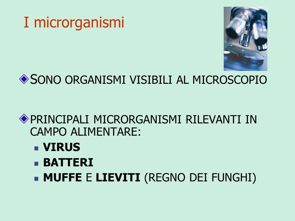 SONO ORGANISMI VISIBILI AL MICROSCOPIO