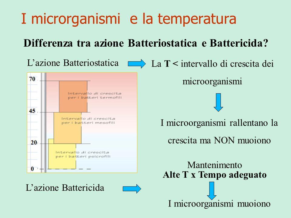 I microrganismi e la temperatura