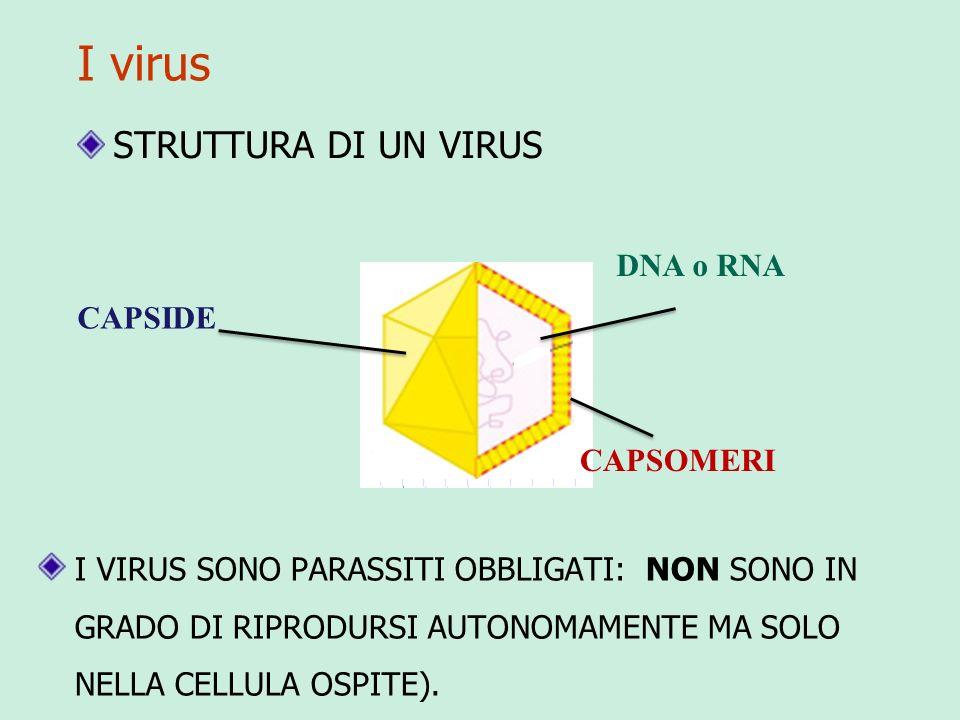 I virus STRUTTURA DI UN VIRUS DNA o RNA CAPSIDE CAPSOMERI