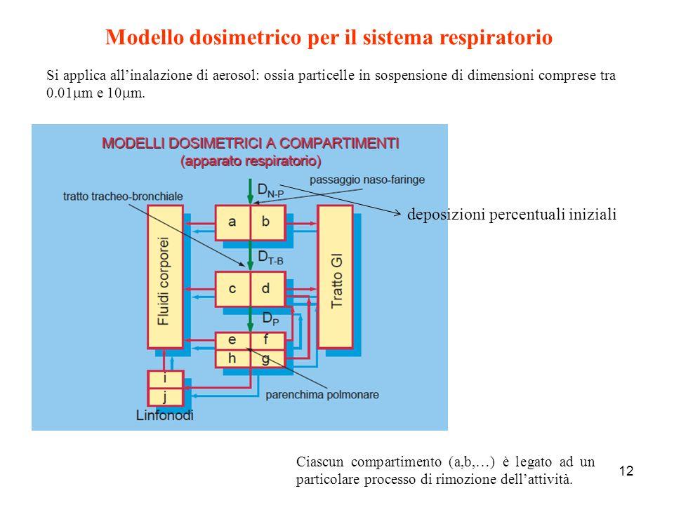 Modello dosimetrico per il sistema respiratorio