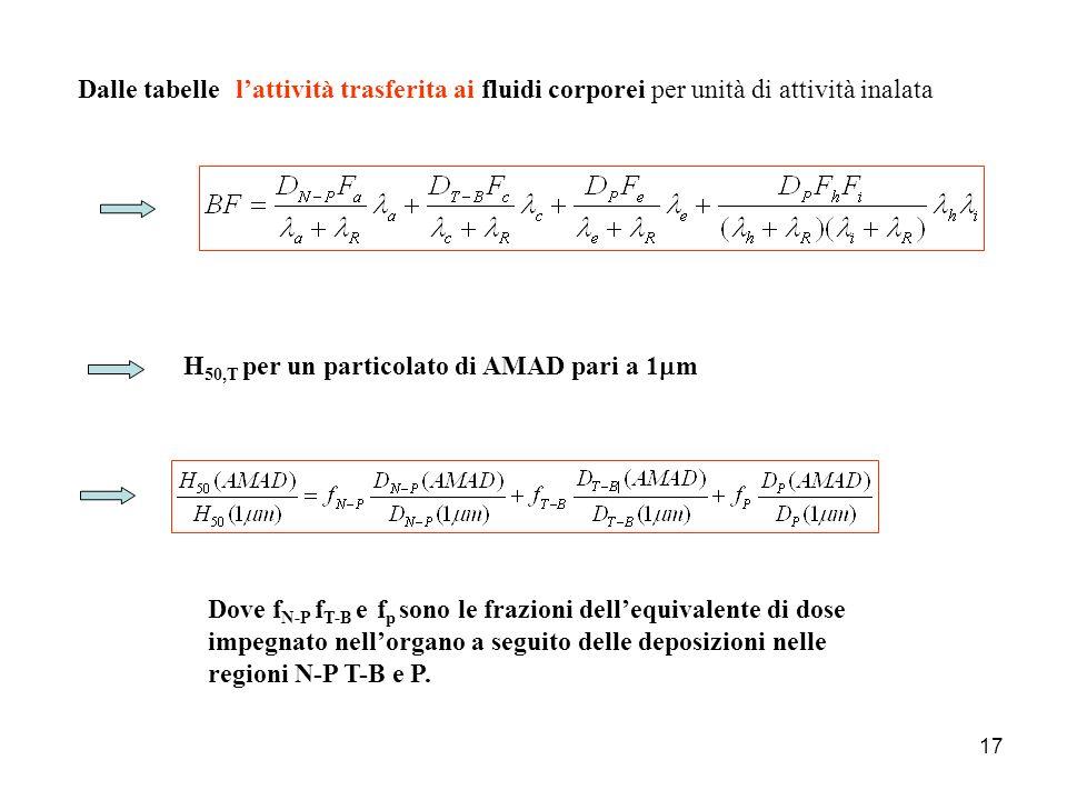 Dalle tabelle l'attività trasferita ai fluidi corporei per unità di attività inalata. H50,T per un particolato di AMAD pari a 1mm.