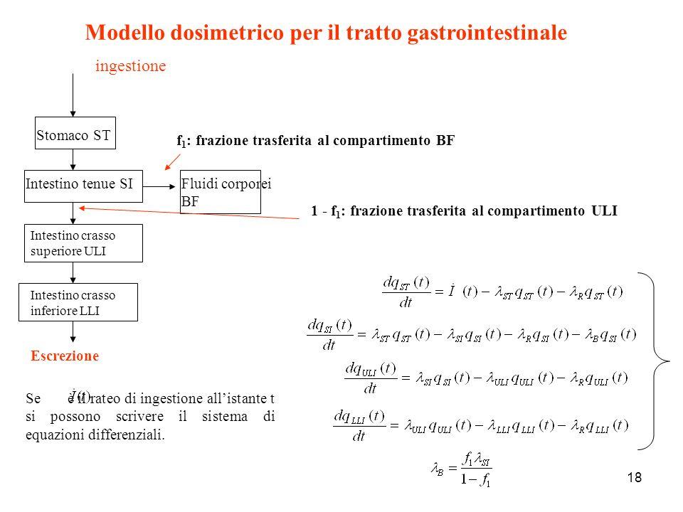 Modello dosimetrico per il tratto gastrointestinale