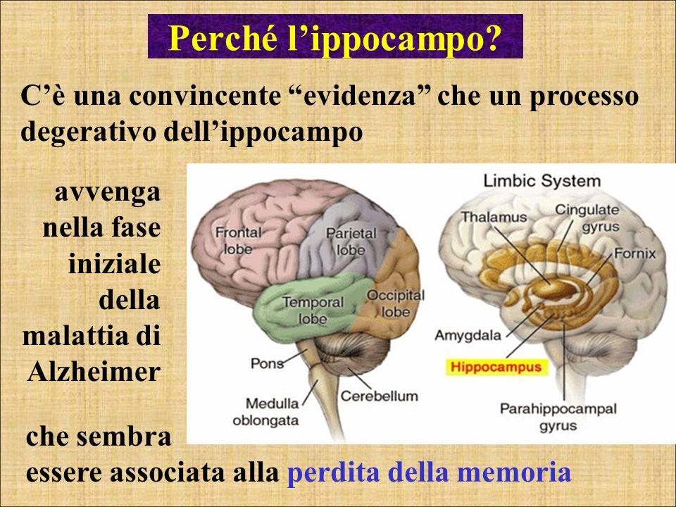Perché l'ippocampo C'è una convincente evidenza che un processo degerativo dell'ippocampo.
