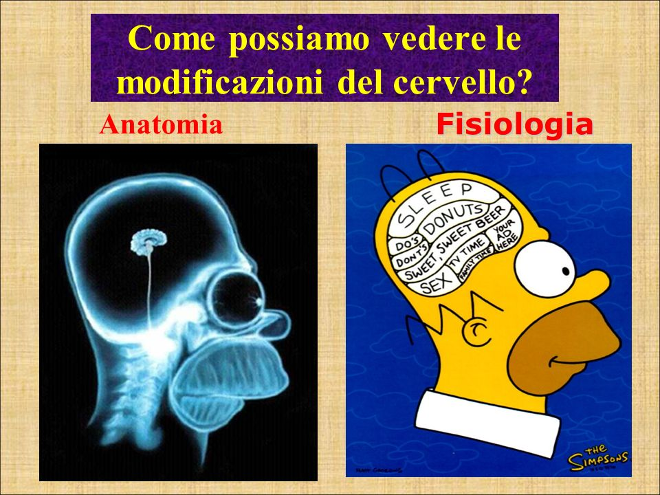 Come possiamo vedere le modificazioni del cervello