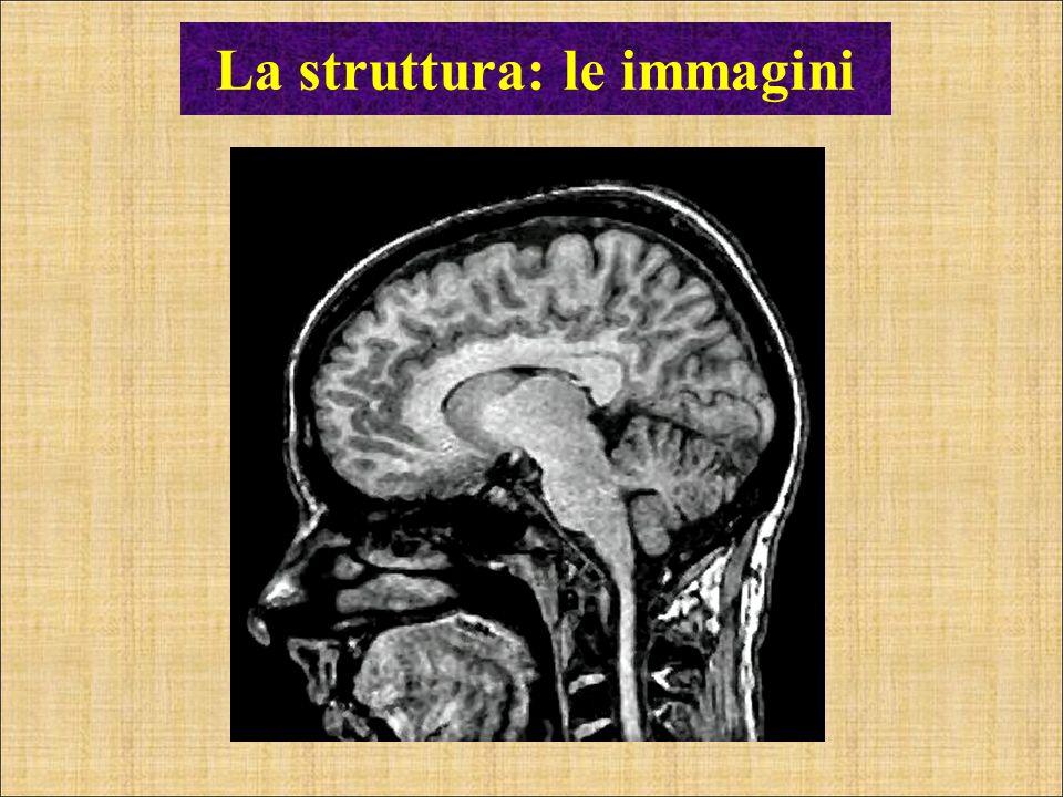 La struttura: le immagini