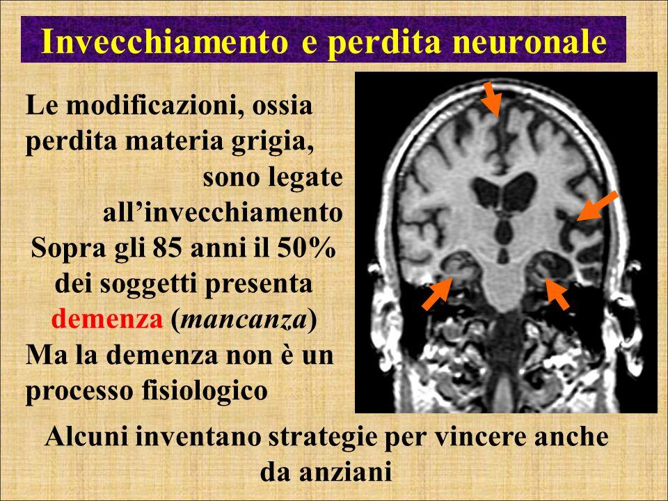 Invecchiamento e perdita neuronale