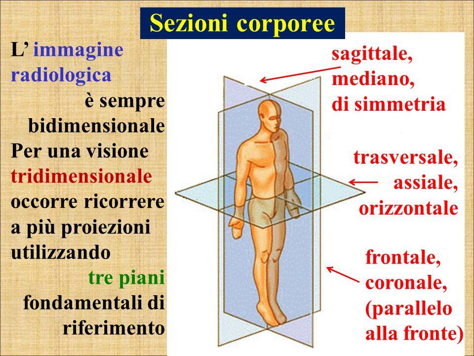 Sezioni corporee L' immagine radiologica sagittale, mediano,