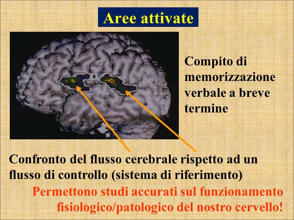 Aree attivate Compito di memorizzazione verbale a breve termine
