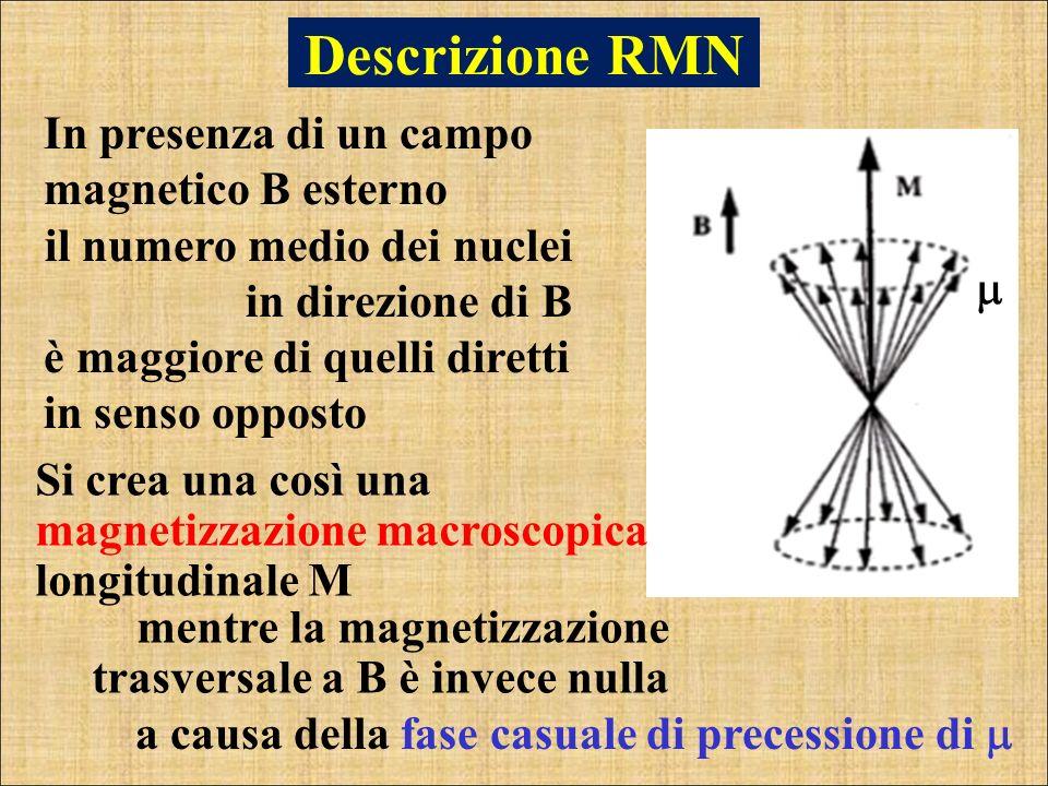 Descrizione RMN In presenza di un campo magnetico B esterno