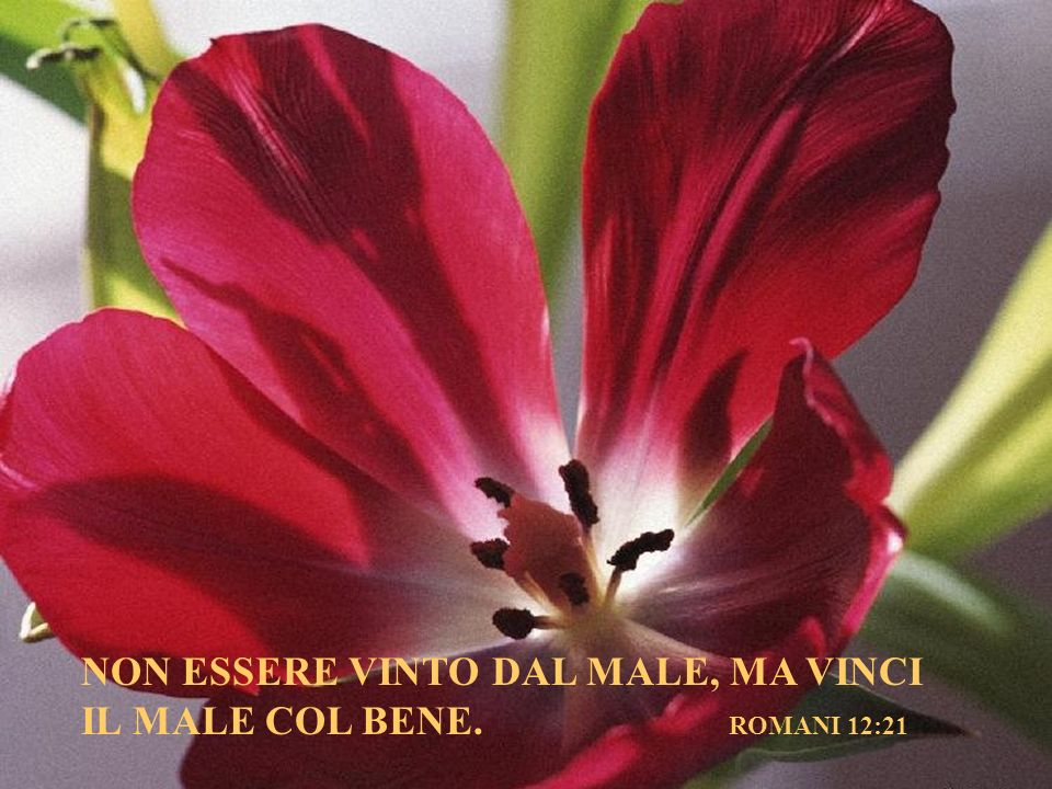 NON ESSERE VINTO DAL MALE, MA VINCI IL MALE COL BENE. ROMANI 12:21