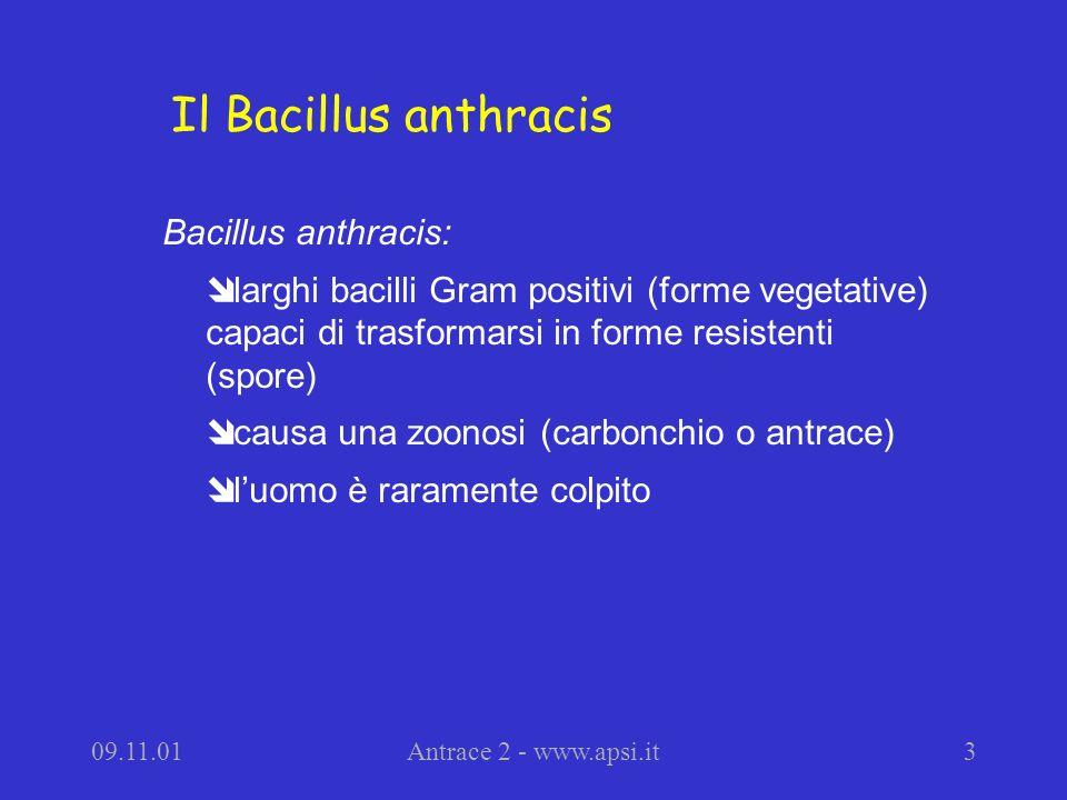 Il Bacillus anthracis Bacillus anthracis: