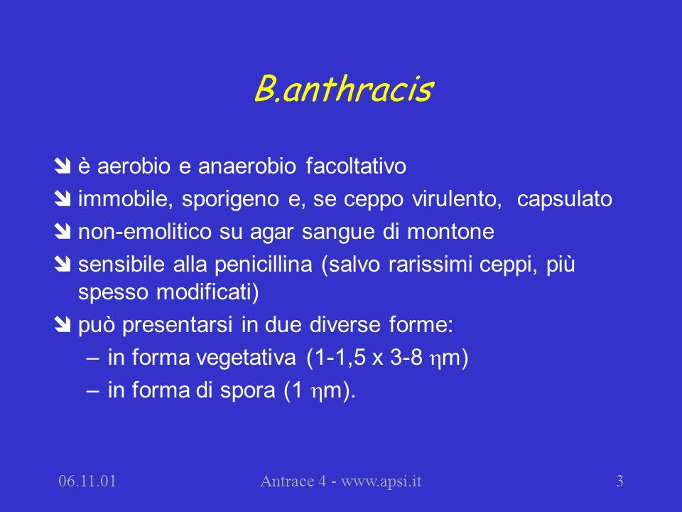 B.anthracis è aerobio e anaerobio facoltativo