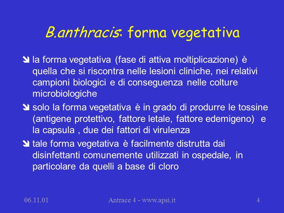 B.anthracis: forma vegetativa