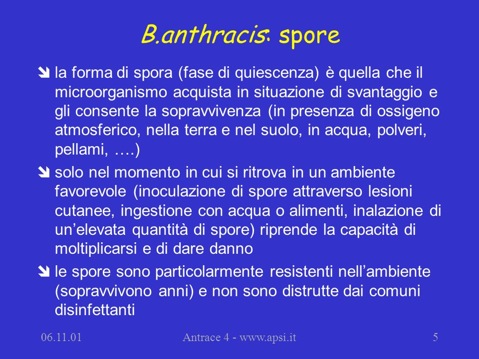 B.anthracis: spore