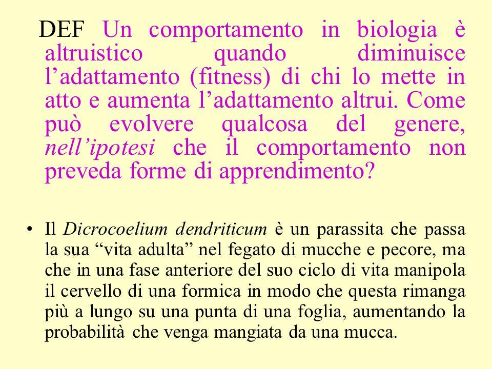 DEF Un comportamento in biologia è altruistico quando diminuisce l'adattamento (fitness) di chi lo mette in atto e aumenta l'adattamento altrui. Come può evolvere qualcosa del genere, nell'ipotesi che il comportamento non preveda forme di apprendimento