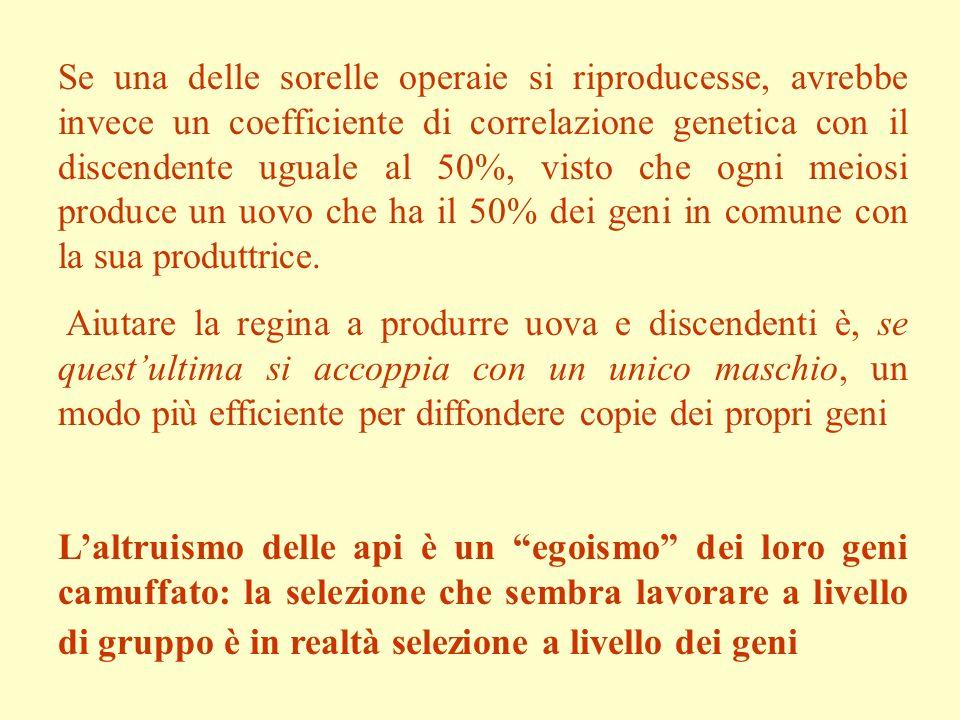 Se una delle sorelle operaie si riproducesse, avrebbe invece un coefficiente di correlazione genetica con il discendente uguale al 50%, visto che ogni meiosi produce un uovo che ha il 50% dei geni in comune con la sua produttrice.