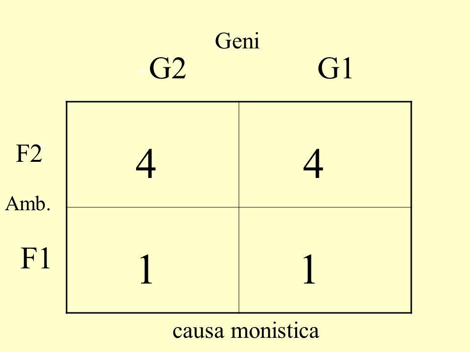 Geni +G2 G1 4 1 + F2 Amb. F1 causa monistica