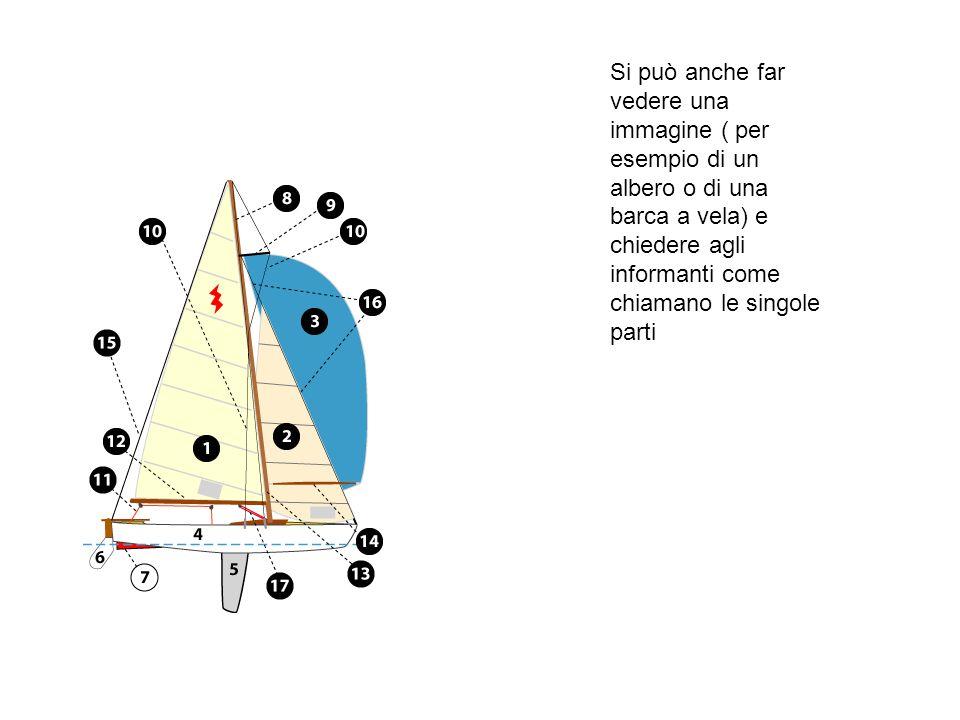 Si può anche far vedere una immagine ( per esempio di un albero o di una barca a vela) e chiedere agli informanti come chiamano le singole parti