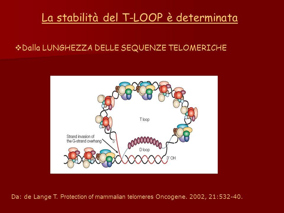 La stabilità del T-LOOP è determinata