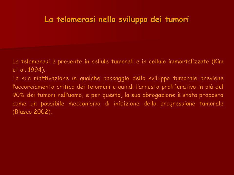 La telomerasi nello sviluppo dei tumori