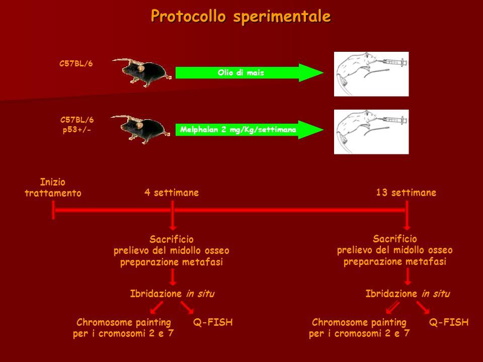 Protocollo sperimentale