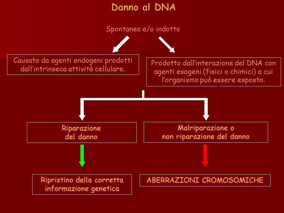 Danno al DNA Spontaneo e/o indotto