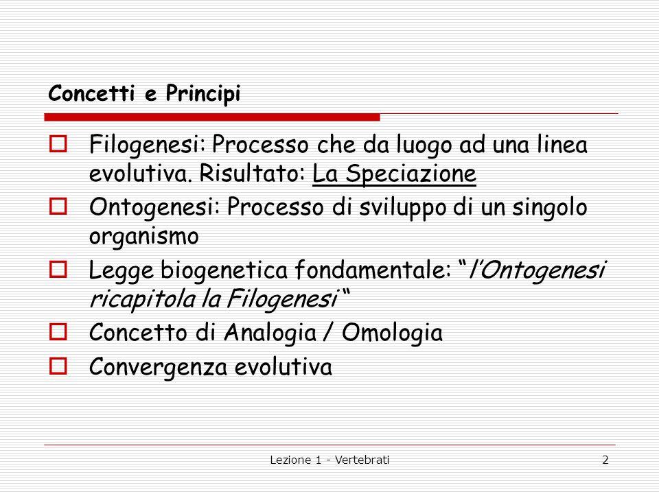 Ontogenesi: Processo di sviluppo di un singolo organismo