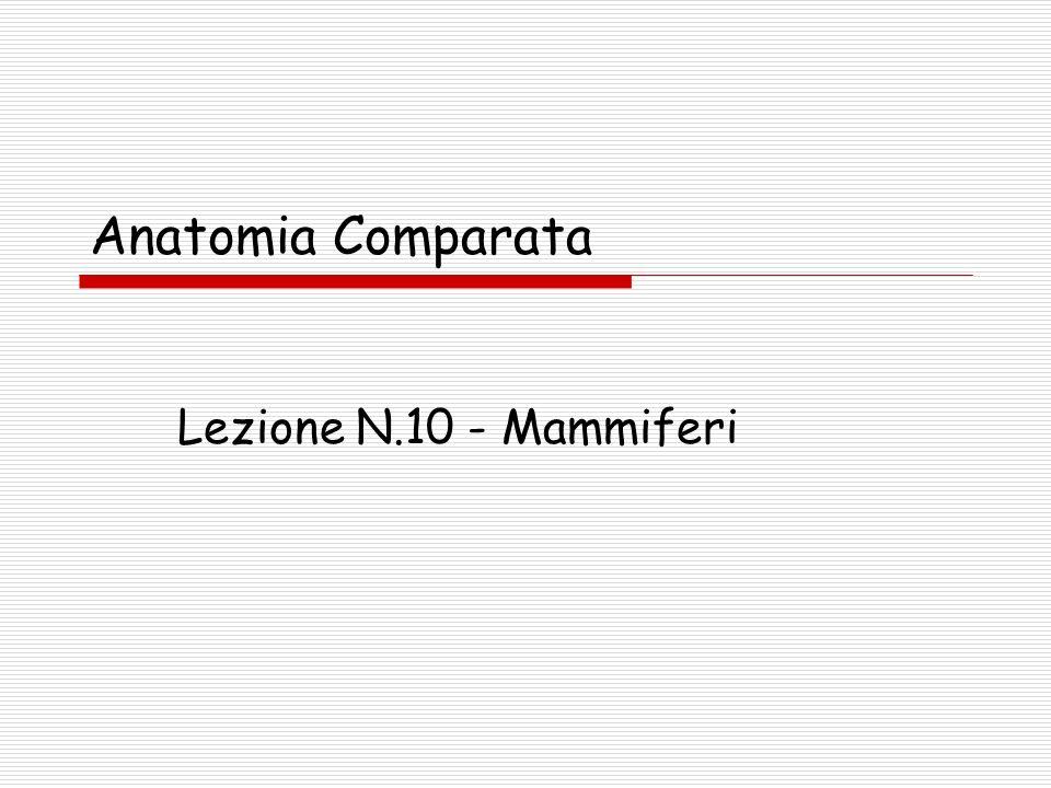 Anatomia Comparata Lezione N.10 - Mammiferi