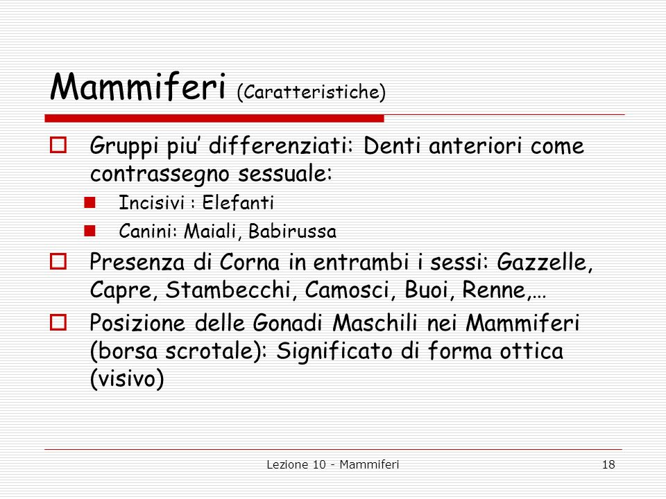 Mammiferi (Caratteristiche)