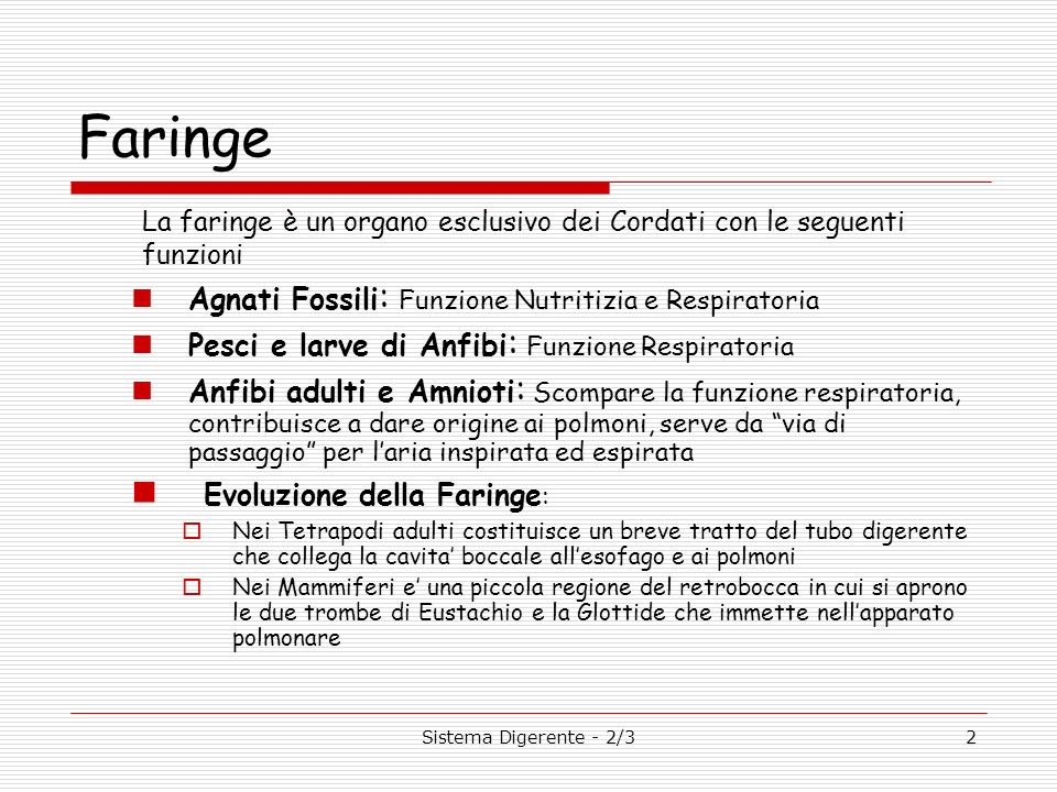 Faringe Evoluzione della Faringe: