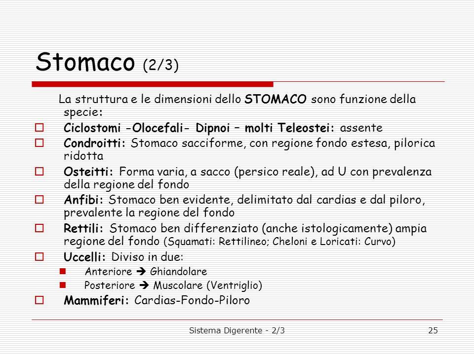 Stomaco (2/3) La struttura e le dimensioni dello STOMACO sono funzione della specie: Ciclostomi -Olocefali- Dipnoi – molti Teleostei: assente.