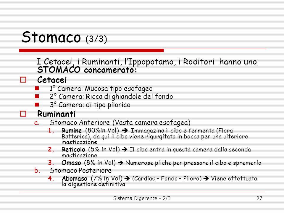 Stomaco (3/3)I Cetacei, i Ruminanti, l'Ippopotamo, i Roditori hanno uno STOMACO concamerato: Cetacei.