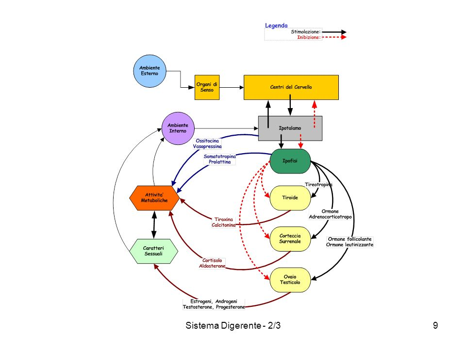 Sistema Digerente - 2/3