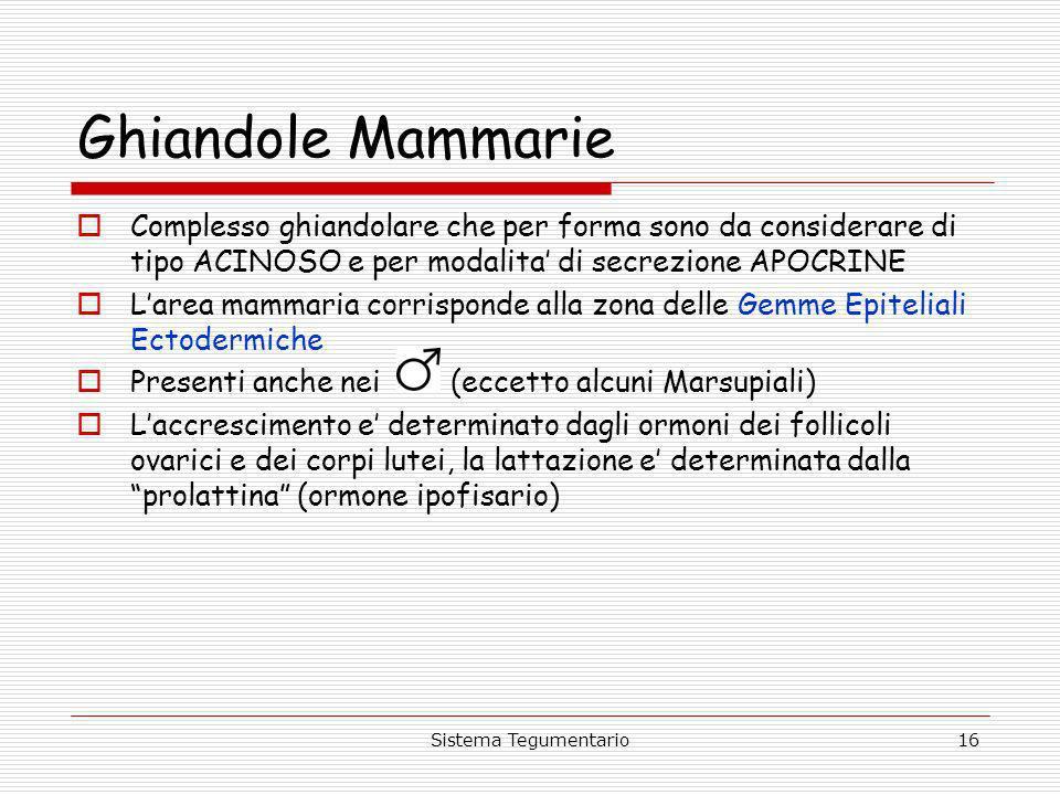Ghiandole Mammarie Complesso ghiandolare che per forma sono da considerare di tipo ACINOSO e per modalita' di secrezione APOCRINE.