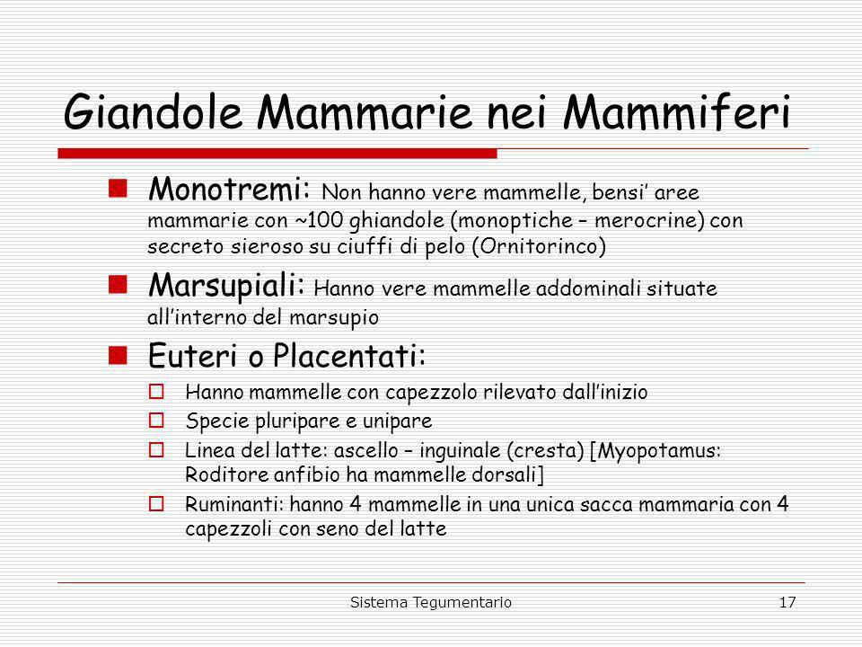 Giandole Mammarie nei Mammiferi