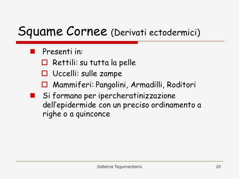 Squame Cornee (Derivati ectodermici)