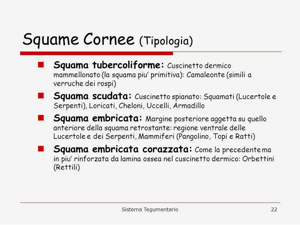 Squame Cornee (Tipologia)