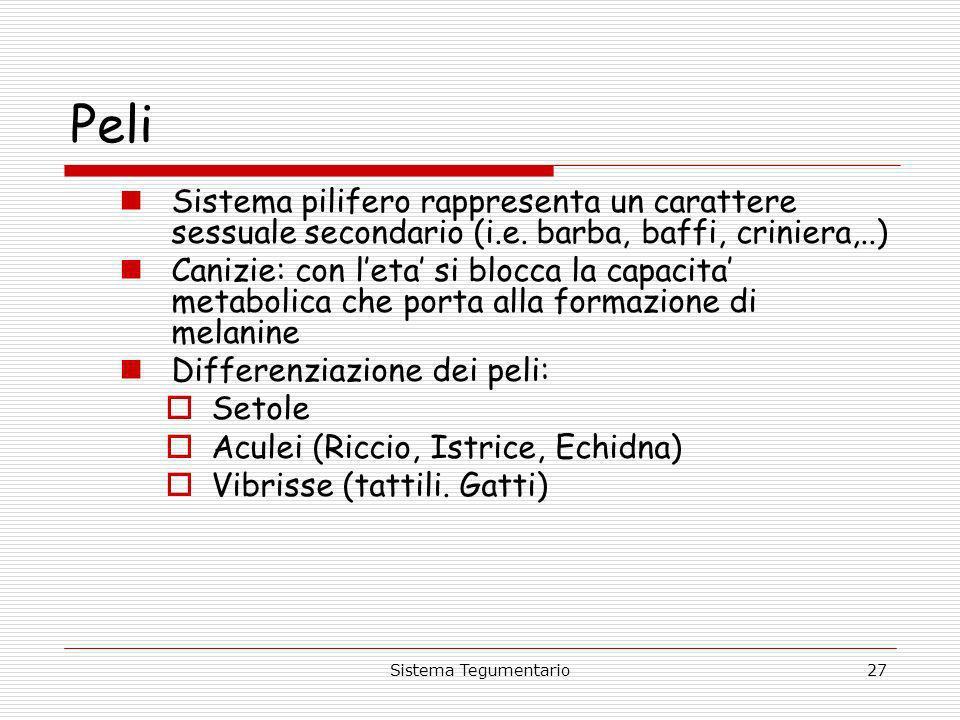 PeliSistema pilifero rappresenta un carattere sessuale secondario (i.e. barba, baffi, criniera,..)
